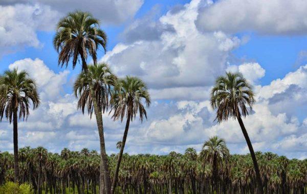 parque-nacional-palmar